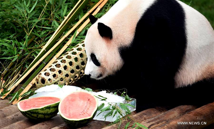 Le Bao eats its birthday food at zoo of Everland in the city of Yongin, South Korea, on 12 July 2017