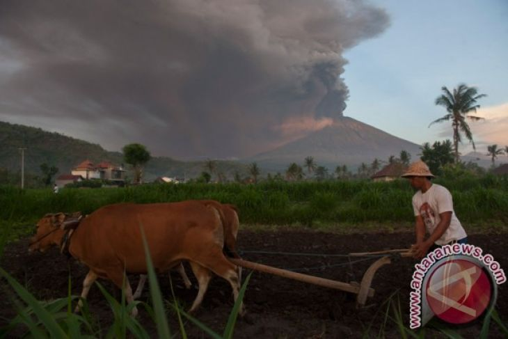 89 K Passengers Affected by Mount Agung`s Eruption, Bali Airport Closed