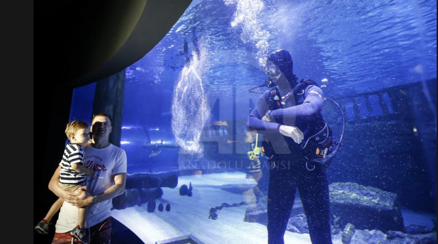 Divers in Antalya Aquarium
